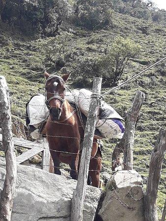 Treking en el Quidio, con ascension al Nevado del Tolima