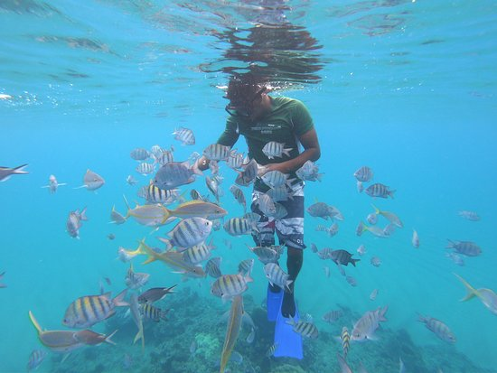 Elvis Tours Puerto Plata : Here fishy fishy!