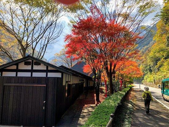 Iyasoba Momijitei: もみじ亭