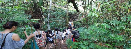 Baturiti, Indonézia: trekking to waterfall....welcome to jungle