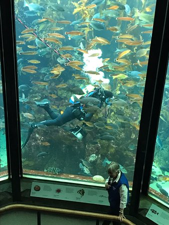 Monterey Bay Aquarium - 2019 All You Need to Know BEFORE ...