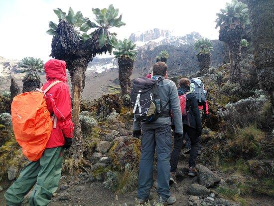 Kilisa Tours & Safaris: Pole Pole up to the top
