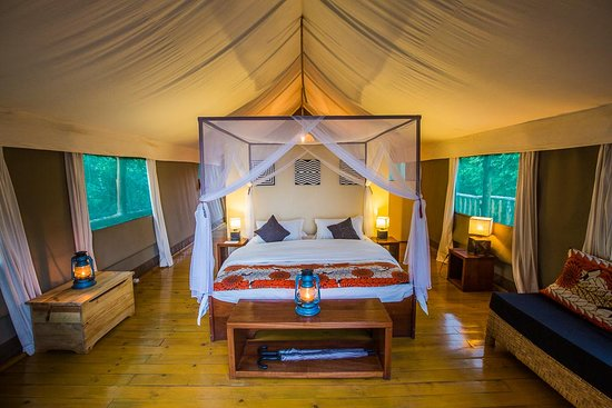 Luxury Tree Top Tent with a king-sized bed