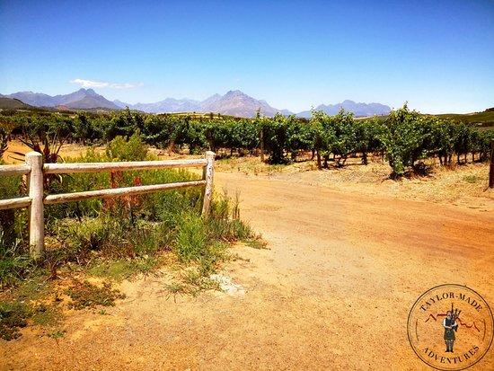 Private Wine Tasting at Simonsig Wine Farm
