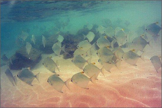 Hikkaduwa Beach: Подводный мир Хиккадувы