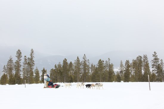 Dog Sled Rides of Winter Park (Fraser) - 2019 All You Need ...