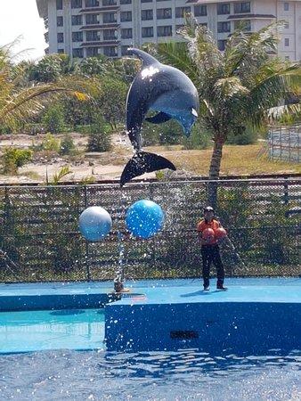 Шоу дельфинов в Vinpearl Land
