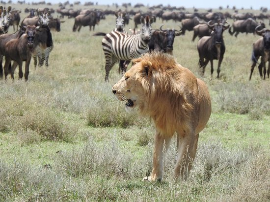 Easy Travel & Tours Ltd: Lion