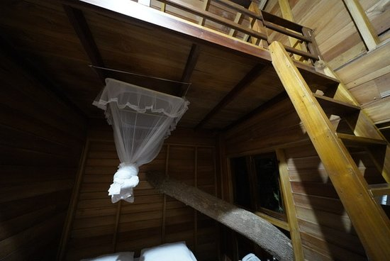View of the top floor of the Tree House - loft and tree coming through.
