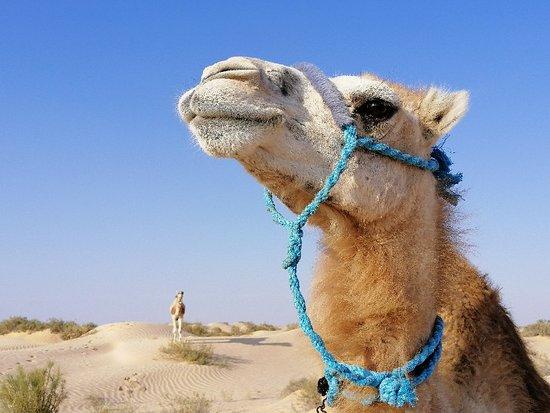 Meharee dans le désert