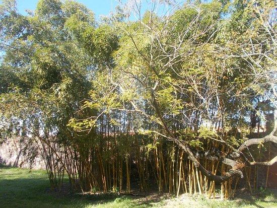 Orto Botanico di Roma - Bosco di bambù