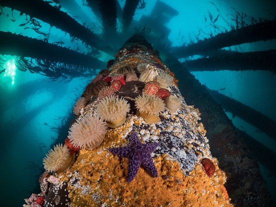 Pacific Pro Dive and Marine Adventures: Diving Painted Pillars, Campbell River