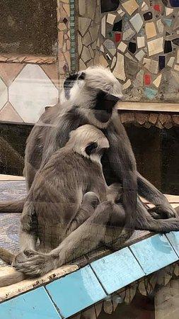 London Zoo Entry Ticket: Monkeys