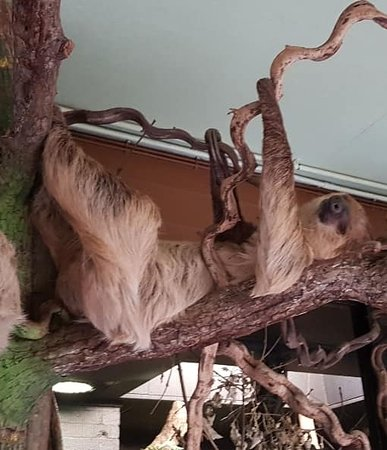 London Zoo Entry Ticket: Sloths