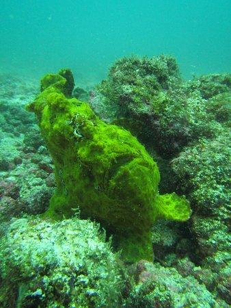 Diving Coiba