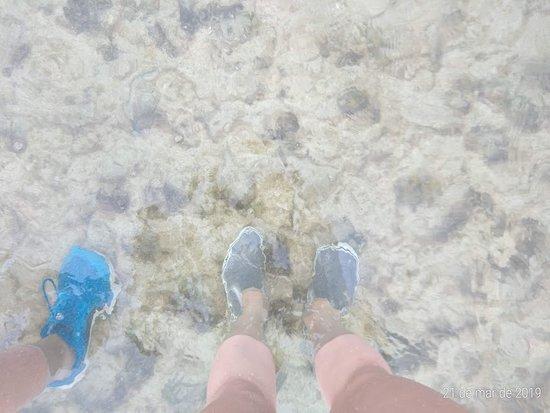 Recife de Fora: Água incrivelmente cristalina