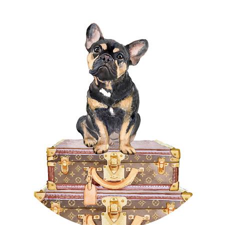Articles de Voyage, Dog Friendly Travel