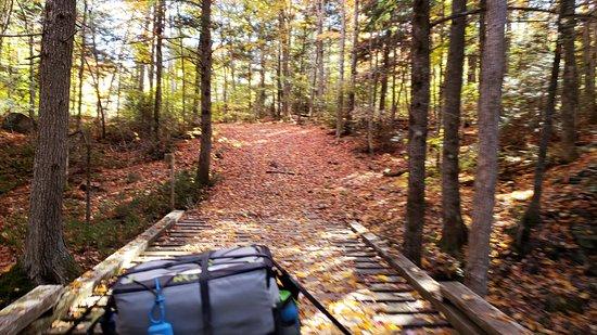 Wild Fox Cabins: Nearby ATV trail riding