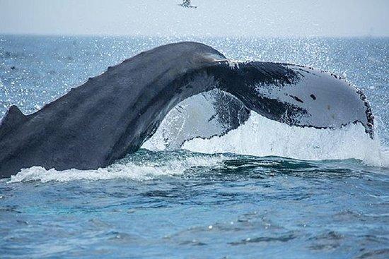 Crociera di avvistamento delle balene