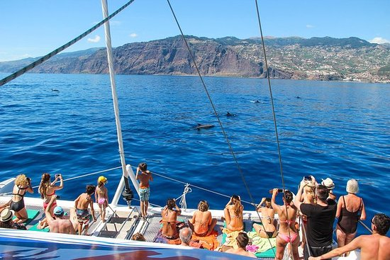 Dolphin and Whale Watching Catamaran...