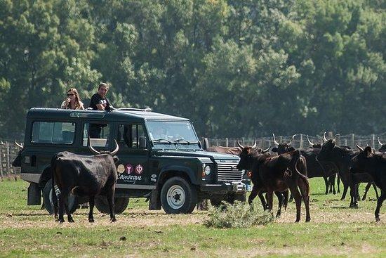Safari de 3 h en 4x4 por la Camarga...