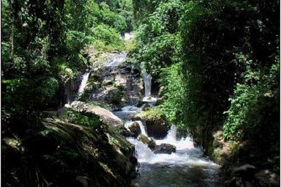 Randonnée d'une journée dans le parc national Cuc Phuong : Cuc Phuong National Park Trekking Day Trip