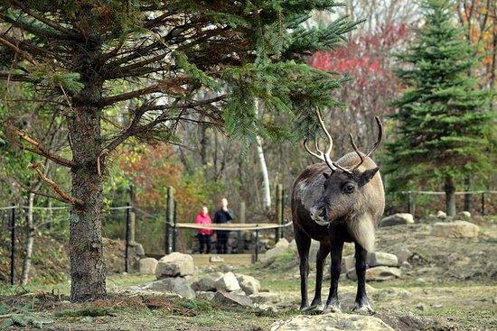 生态博物馆动物园:在夏季探索魁北克的野生动物