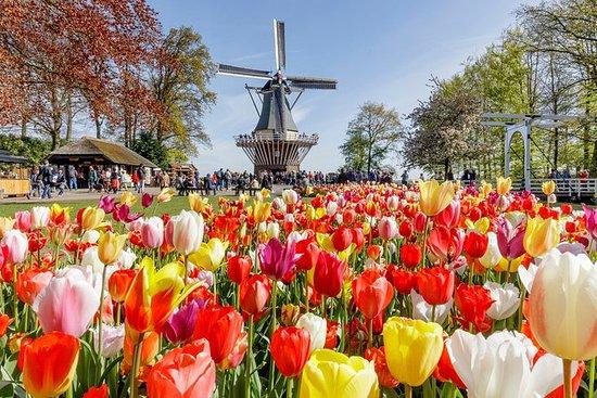 Keukenhof庭園案内された花畑を含むアムステルダムからの半日旅行