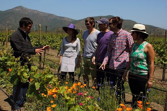 Emiliana Vineyards Organic Tour