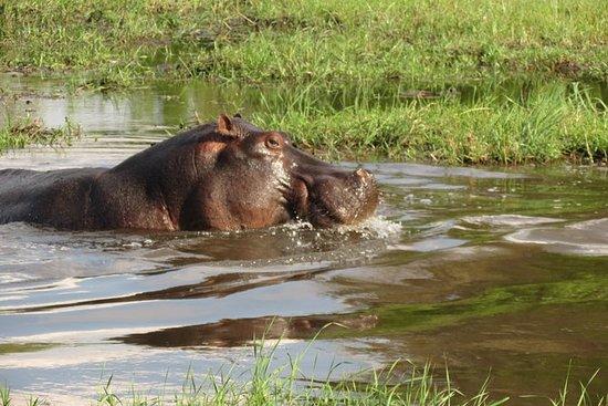 3 giorni Safari Mokoro nel Delta