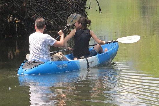 Half day Mangrove by Kayaking or...