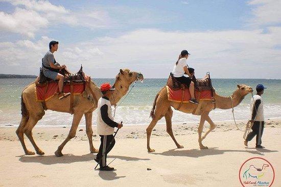 骆驼骑在克兰海滩金巴兰巴厘岛周围30分钟