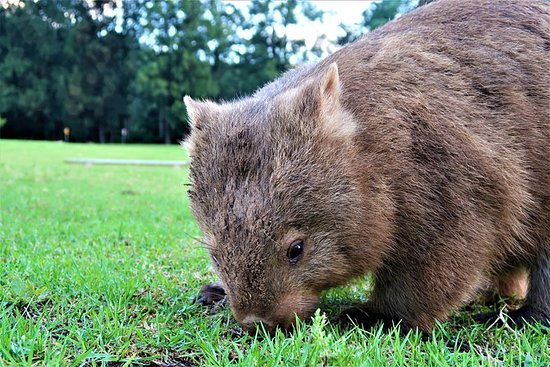 Walking with Wombats Day Tour...
