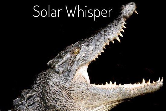 1 uur Daintree River krokodil en ...