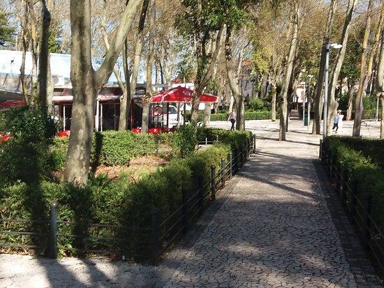 Mata Municipal de Vila Vicosa