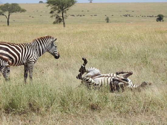 Ngorongoro Conservation Area-bild