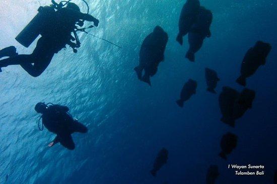 探险Tulamben Shipwreck潜水之旅。