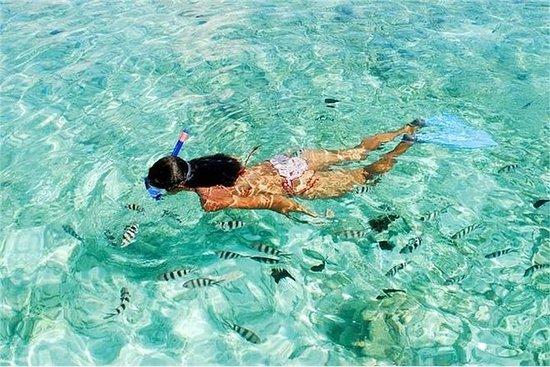 Snorkling på Mahmya Island från Hurghada: Snorkeling at Mahmya Island from Hurghada