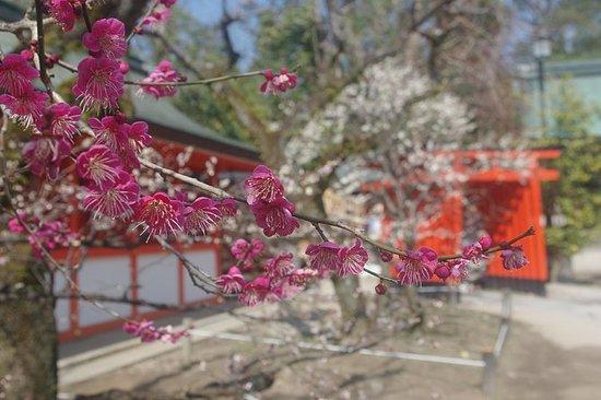 Hiroshi Taxi-Kyoto taxi tour