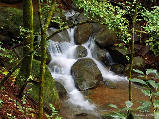 Hiking by a creek in the cloud forest. Monteverde Wild Hikes, Puntarenas, Costa Rica.