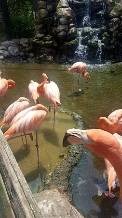 A little piece of paradise full of friendly flamingos.