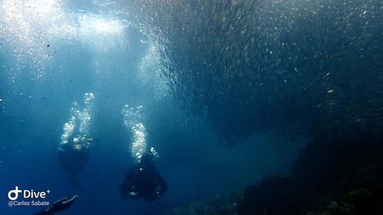 more sardines