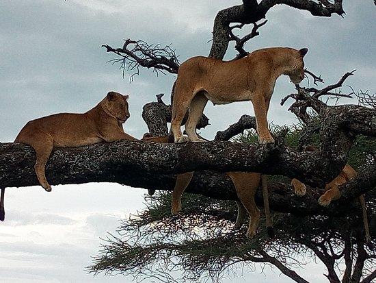 坦尚尼亞照片