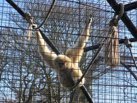 Welsh Mountain Zoo: Enclosure