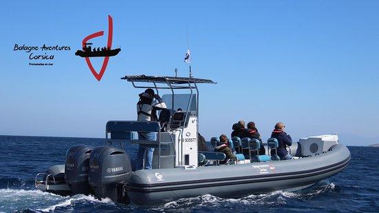 Balagne Aventures Corsica, promenades, excursions en bateau a Sant Ambroggio,en Balagne, en Corse