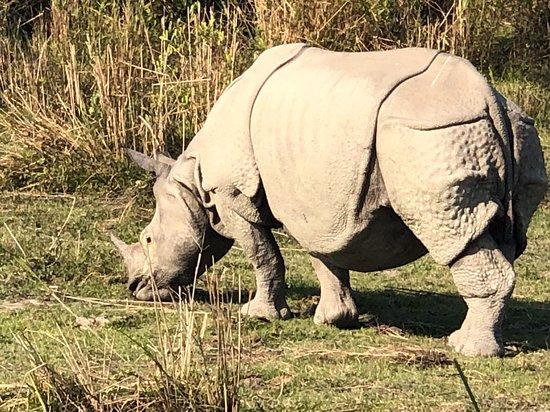 Kaziranga National Park, India: Rhino!