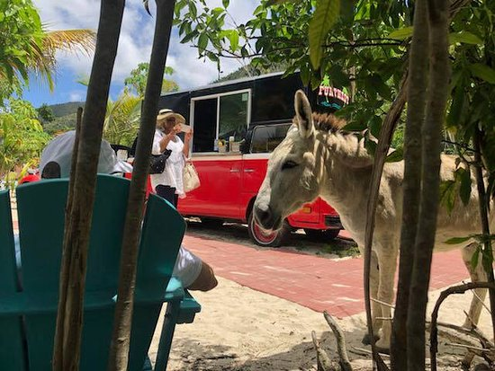 Maho Bay, St. John: Even the donkeys enjoy the Furthest food truck!
