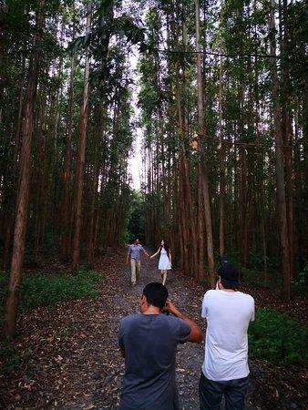 Esse caminho entre os eucaliptos também fica muito charmoso nas fotos, e também fica na mesma fazenda do campo aberto!