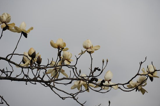 Trongsa District, Bhutan: Flower