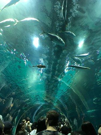 Rio de Janeiro, RJ: Túnel submerso